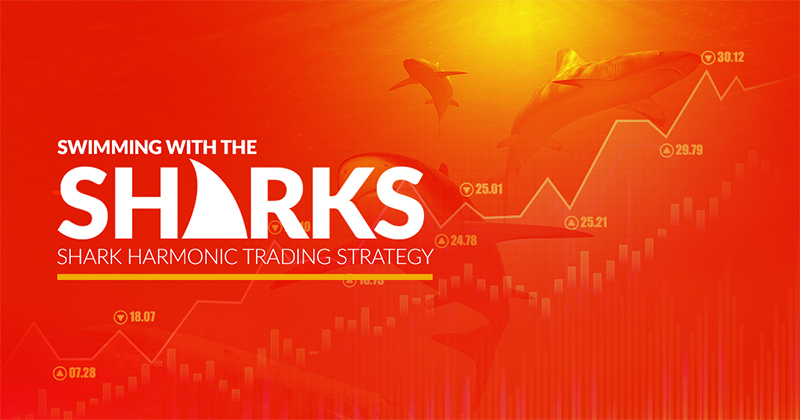 Swimming with the Sharks - Shark Harmonic Trading Strategy