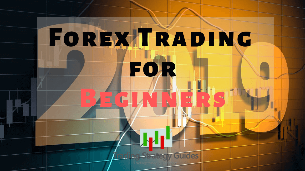 Forex trading for newbies